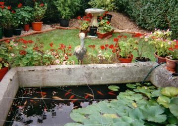 Diy building a pond advice for Concrete garden pond